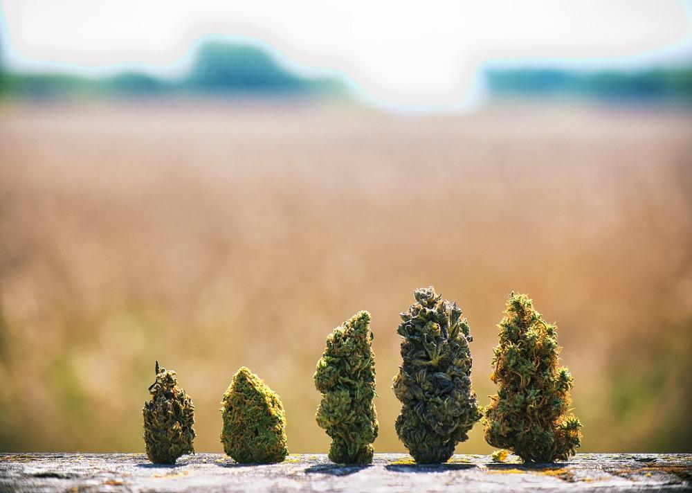 Marijuana Strains for Calming