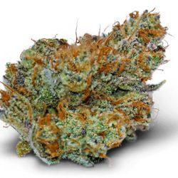 ac/dc x omg cannabis flower