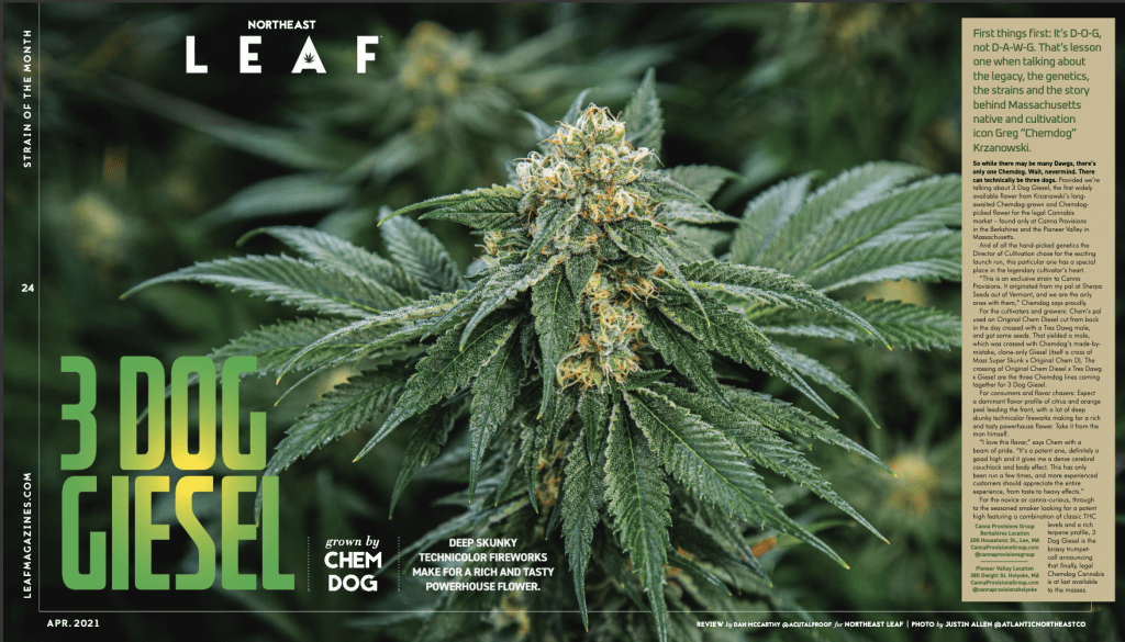 northeast leaf april 2021 chemdog canna provisions